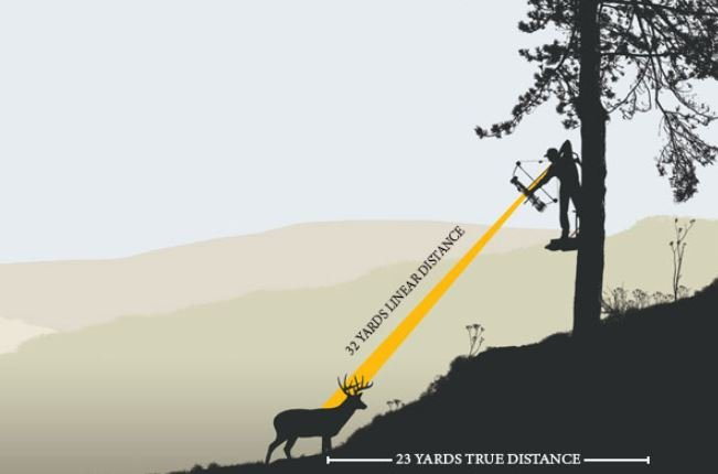Do you aim high or low when shooting from a tree stand